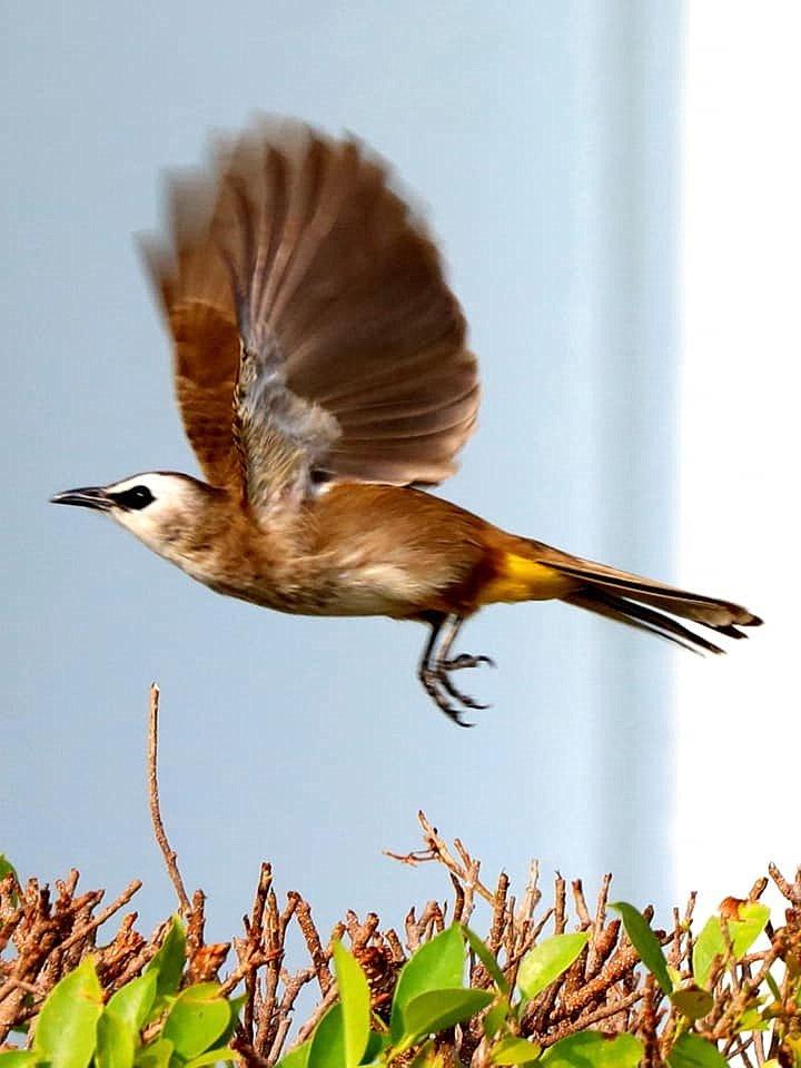 bird_19.jpg