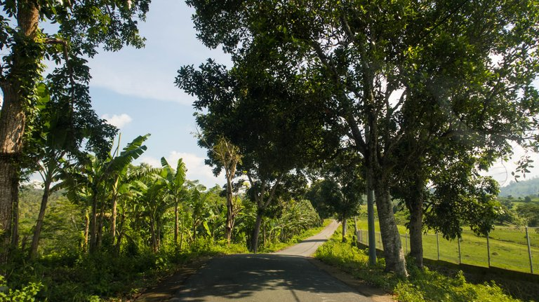 The road was narrow with banana trees farm and grass field on each side.