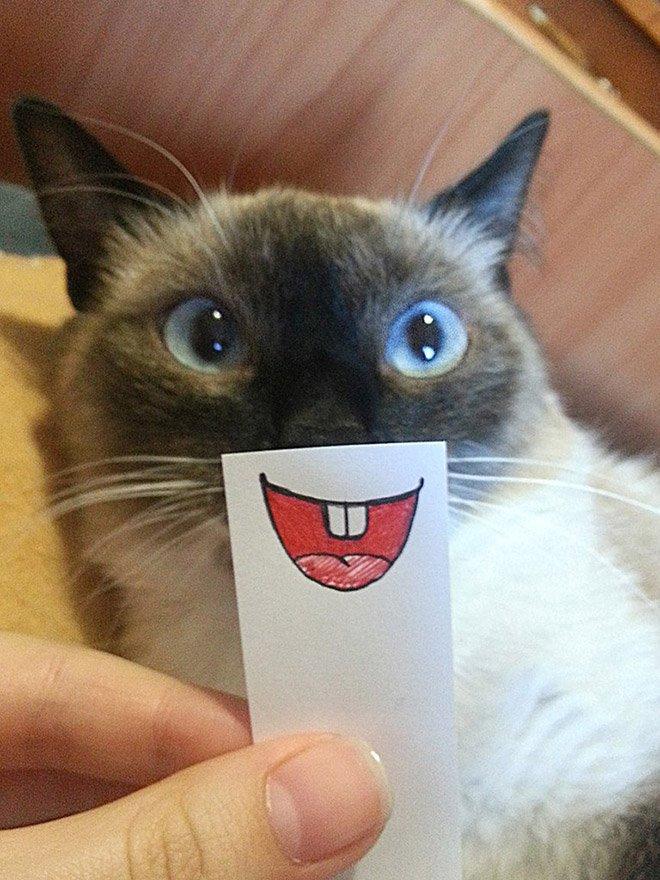 kucing4.jpg