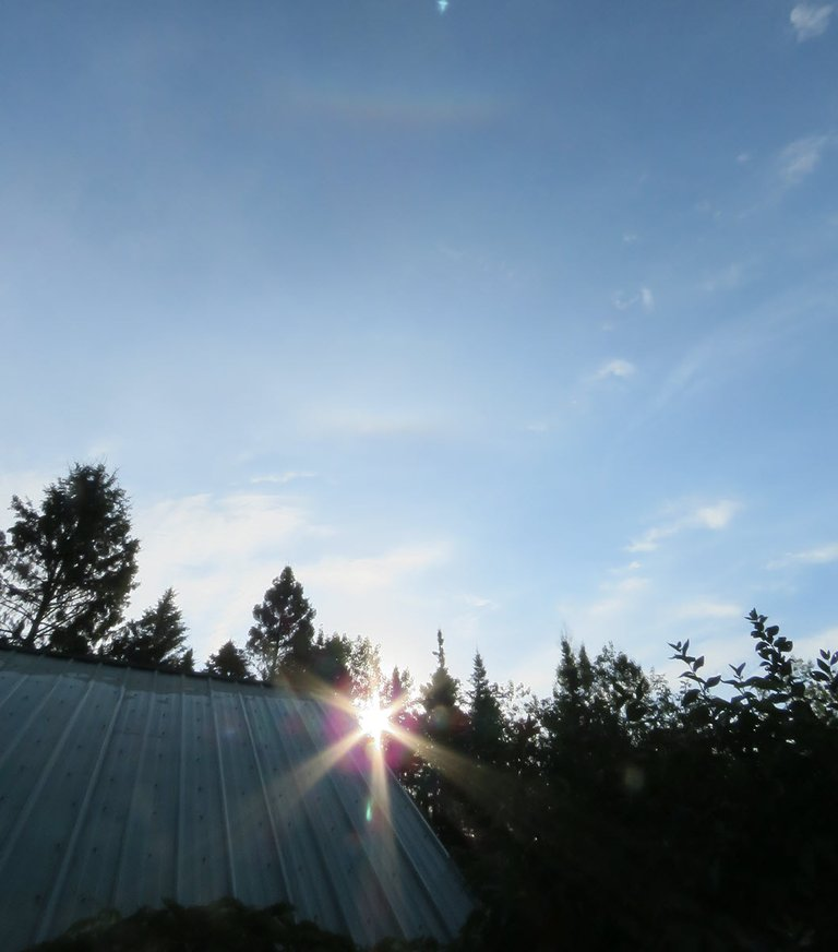 early morning sunbeams on edge of rooftop in everrgreen silhouettes.JPG
