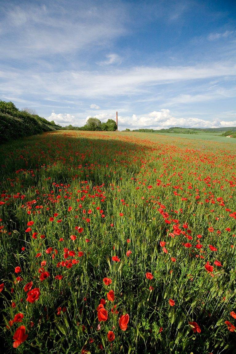 poppy fields landscape super wide angle photography by fraenk