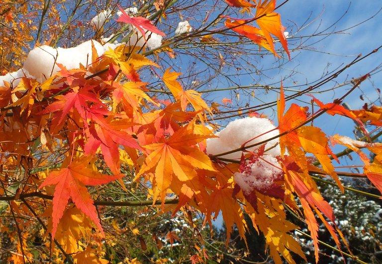 WLE0097-Leaves.jpg