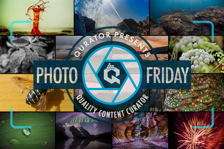 photo_friday02.png