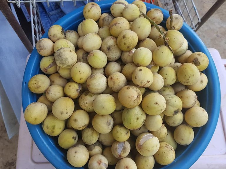 fruits lanzones with Dais Cus.jpg