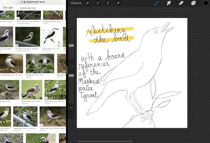sketching_the_bird.jpg