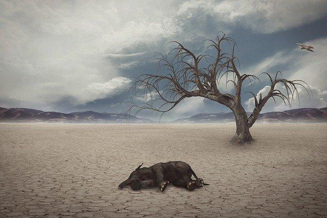 drought-1733889_640.jpg