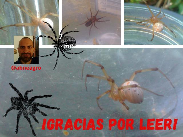 Arañas final.png