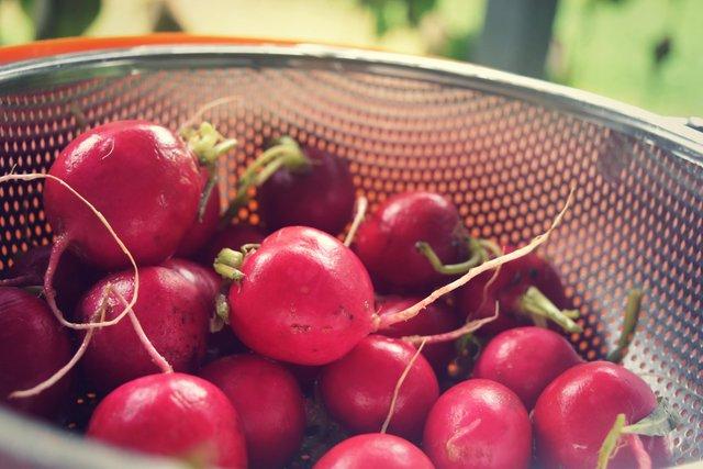 red-radish-pickle-1.jpg