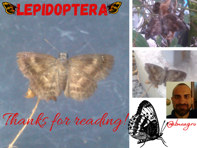Lepidoptera Final.png