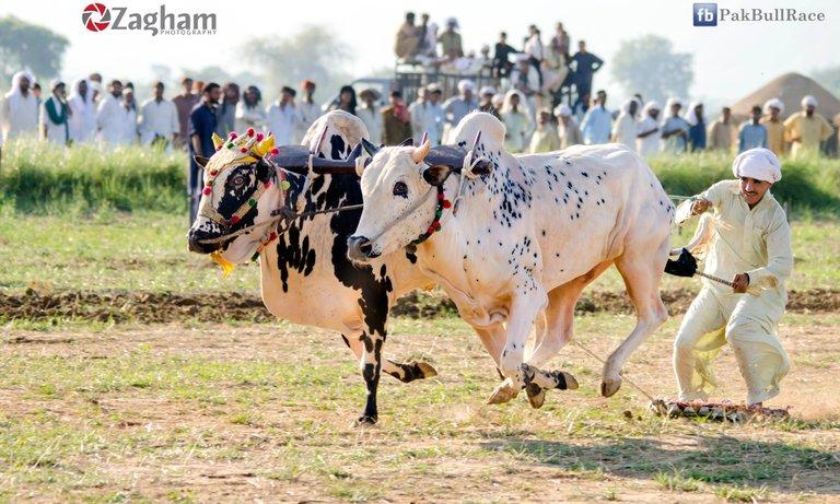 Jhang Bahtar BR.jpg