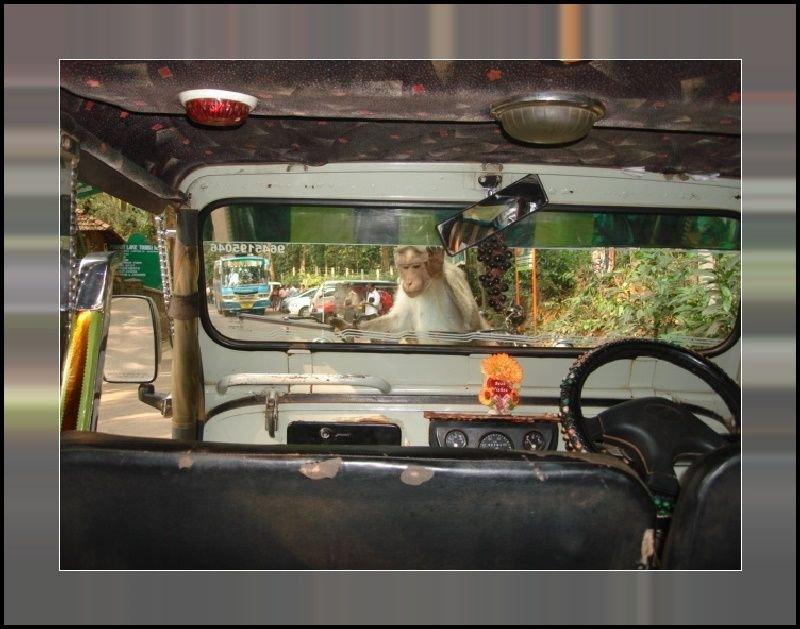 Monkeys Rickshaw.jpg