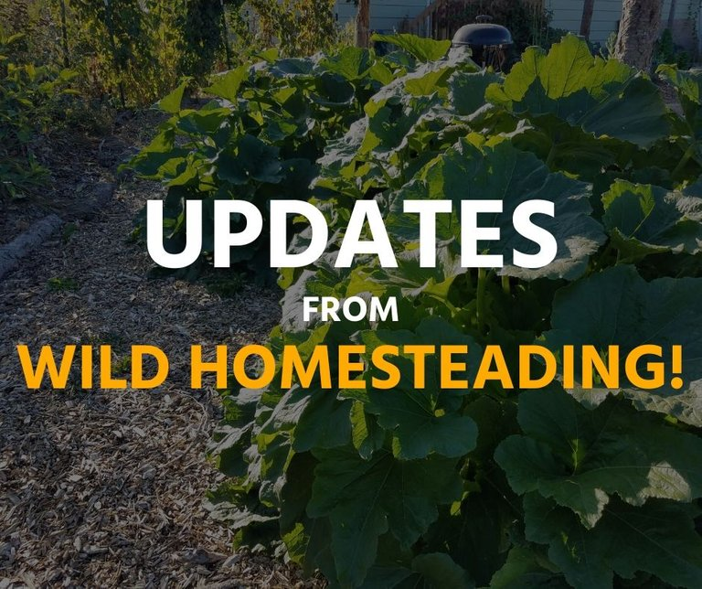 wild-homesteading-updates.jpg