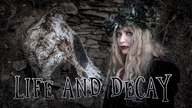 life and decay_banner.jpg