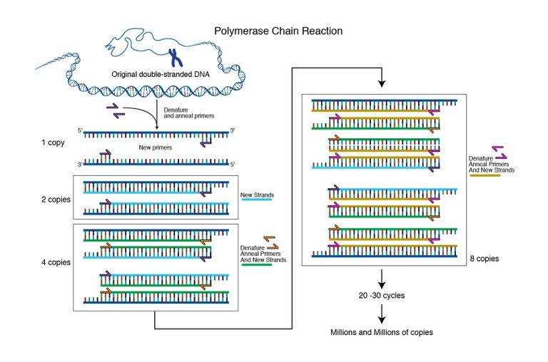 polymerase_chain_reaction.jpg