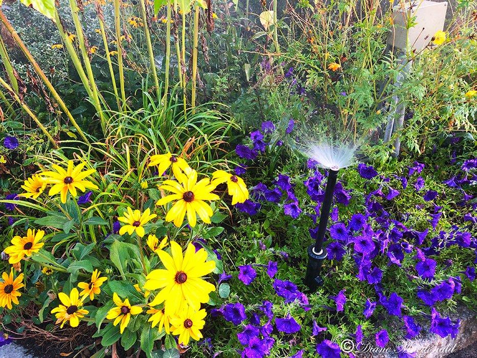 Flowers and sprinkler.jpg