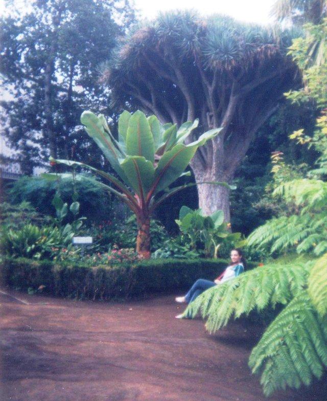 La Orotava Hijuela Jardín Botánico.jpg