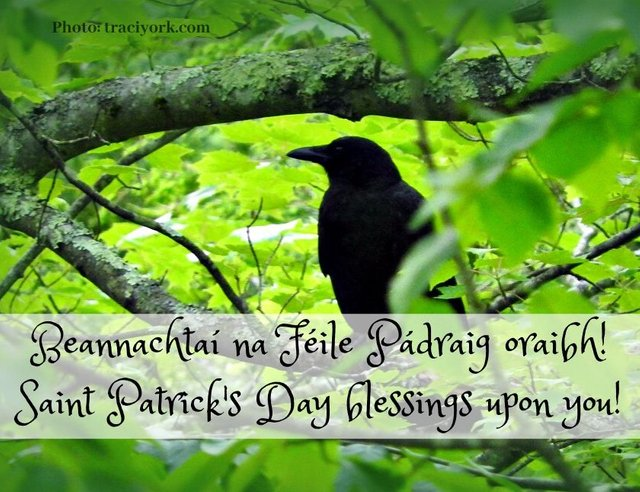 Saint Patricks Day Blessing with URL.jpg