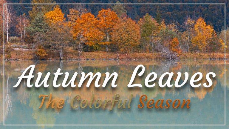 Autumn Leaves | Colorful Season