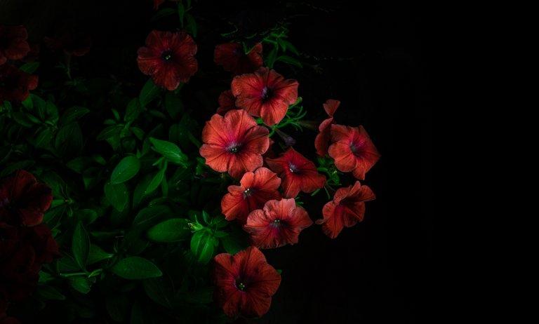 2021_07_17_flowermom_137_lr_2.jpg