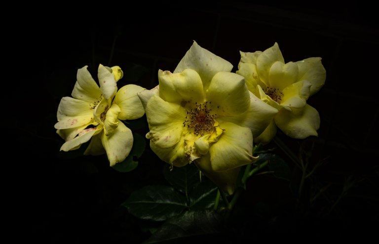 2021_07_17_flowermom_106_lr_2.jpg