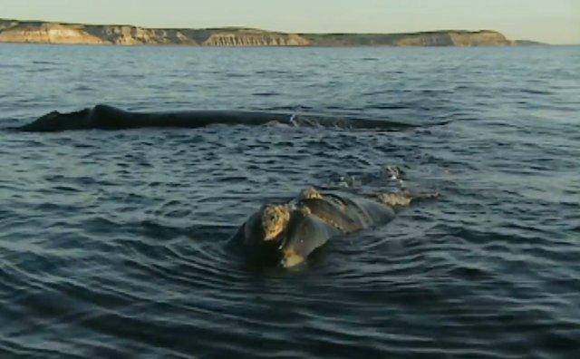 02.-Whales in Patagonia-11.jpg
