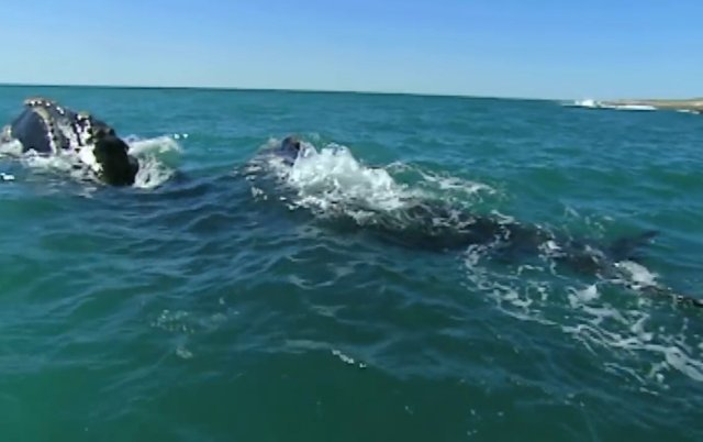 02.-Whales in Patagonia-14.jpg