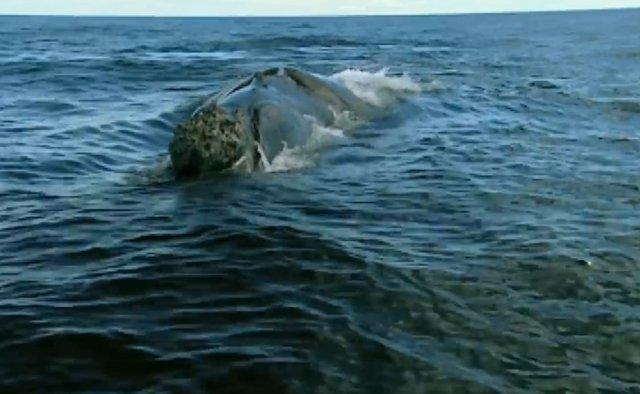 02.-Whales in Patagonia-15.jpg