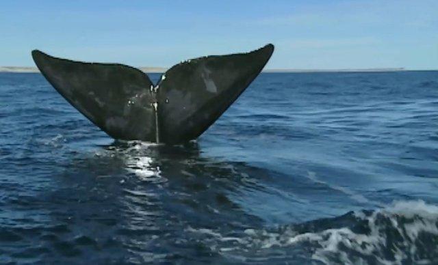 02.-Whales in Patagonia-10.jpg