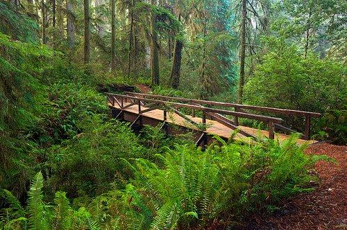 redwood-national-park-steve-d.jpg