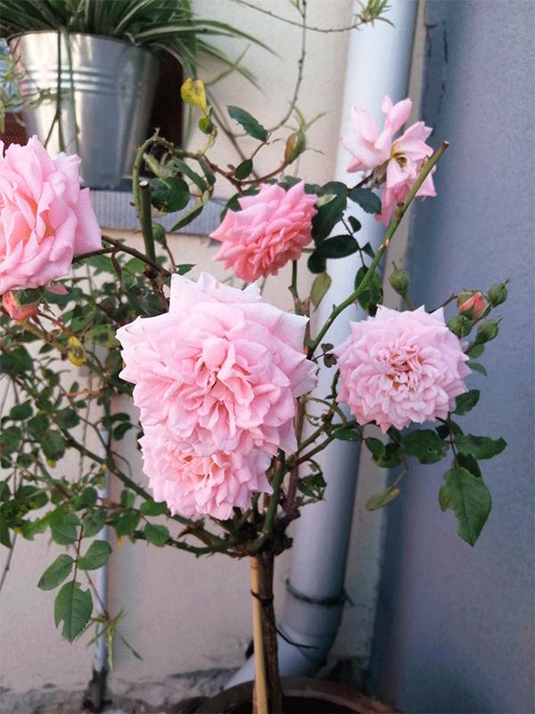 Flores3.png