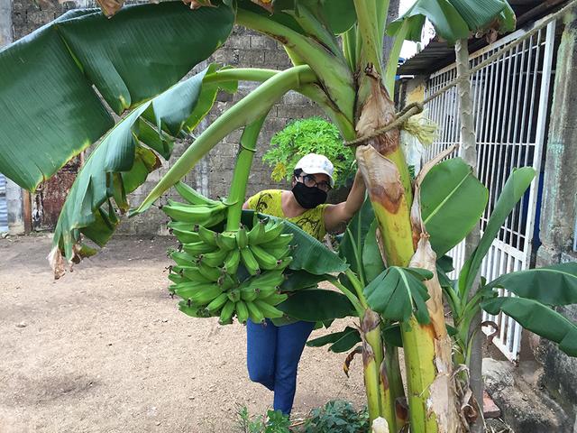 Banano2.png
