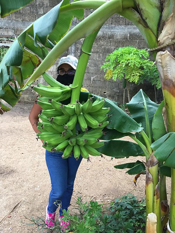 Banano6.png