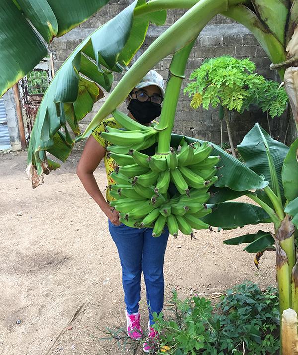 Banano5.png