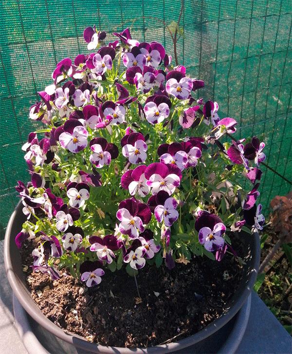 Flores6.png