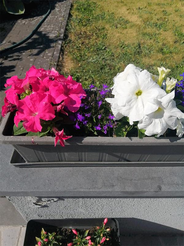 Flores5.png