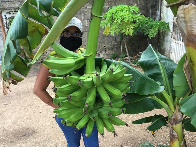Banano3.png