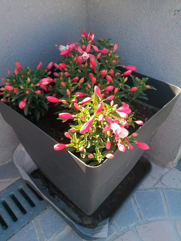Flores2.png