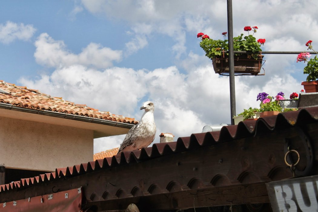 On the roof of the house are flowers and ... a seagull