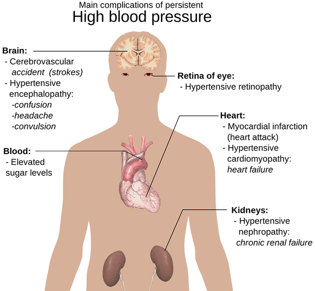 the-human-body-1279987_640.png