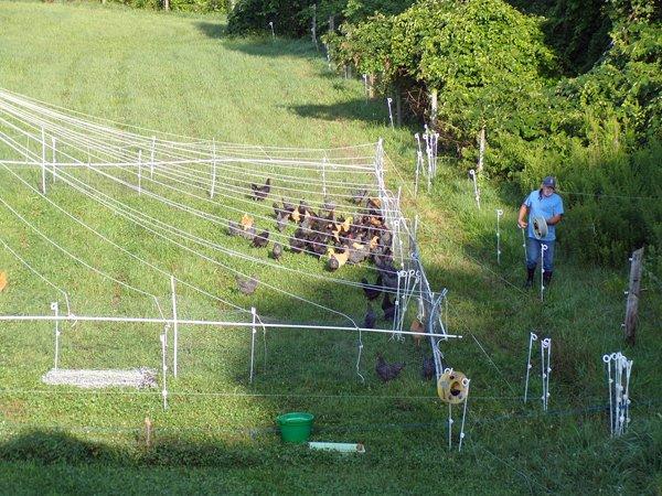 Pasture pen  the supervisors crop July 2020.jpg