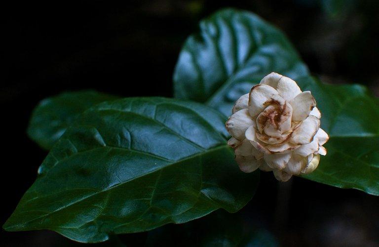 flor2-pa-1200.jpg