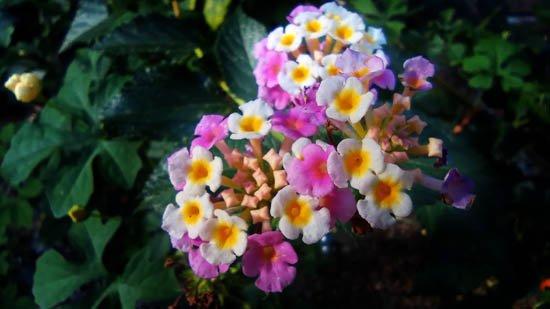 florecitas-550.jpg