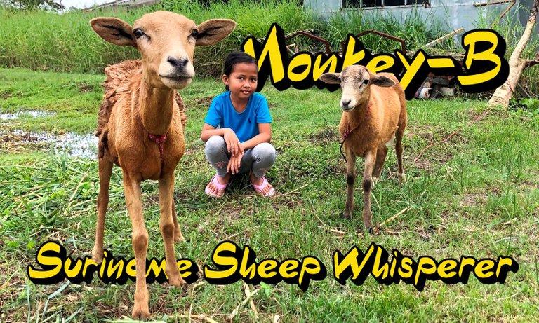 sheeprhumb.JPG