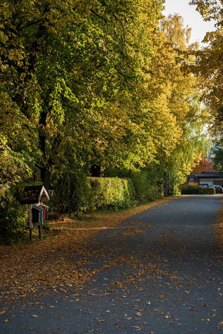sjärvi2.jpg