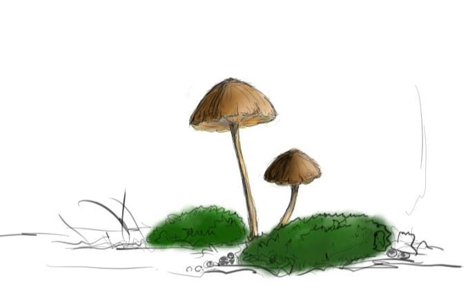 small mushroms 3.jpg