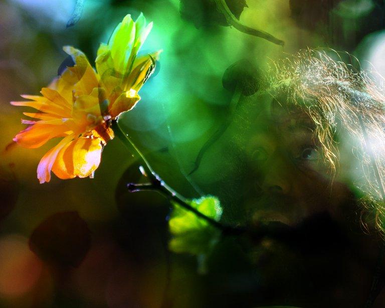 shroom-flower.jpg