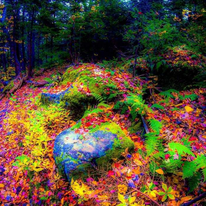 I swear I wasn't on acid when I took this picture of the foliage
