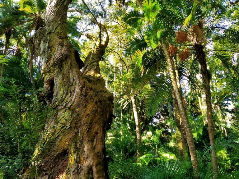Beauties of Azores: Jose do Canto Botanical Garden in Ponta Delgada
