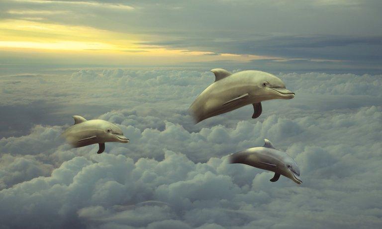 sky dolphins