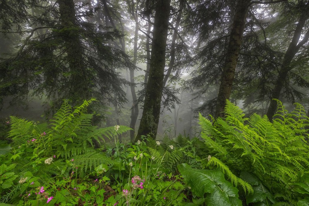 Fairy Forest Auvergne